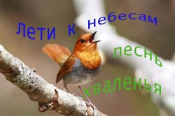 Лети к небесам, песнь хваленья